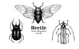 Vector retro hand drawn beetle set. Bug, dor, dorr, insect on a white background. Vintage illustration