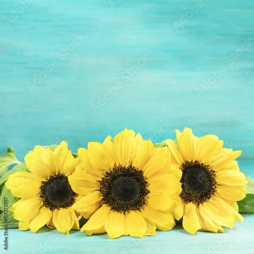 Bouquet of yellow sunflowers on turquoise background