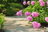 Garden with pink peonies