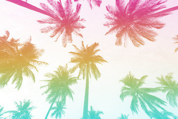 Silhouette palm tree with colorful filter for summer background.