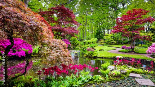 Fototapety, obrazy : Traditional Japanese Garden in The Hague.