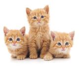Three red cats.