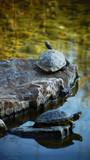 Schildkröte auf einem Stein