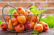 Quadro Fresh apricots with leaves in basket on wooden table