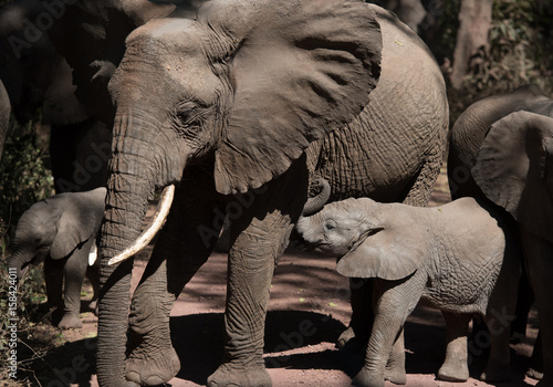 Mom and baby elephant Poster