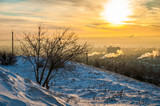 Winter dawn. Trees, birds, the city in the morning under the snow. Winter background. Saratov, Russia.