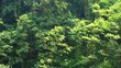 Green trees summer forest during wind background