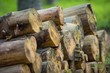 Pile of Large Wood Logs - 158471023