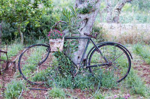 Staande foto Fiets Supersano, Italy - May 24, 2017: Old bicycle in a cultivated field