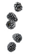 Isolated berries. Five falling blackberry fruits isolated on white background with clipping path