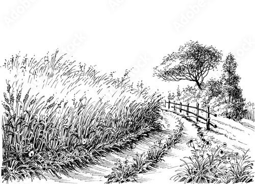 Cereals field vector drawing - 158499642