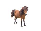 Brown pony horse - 158500811
