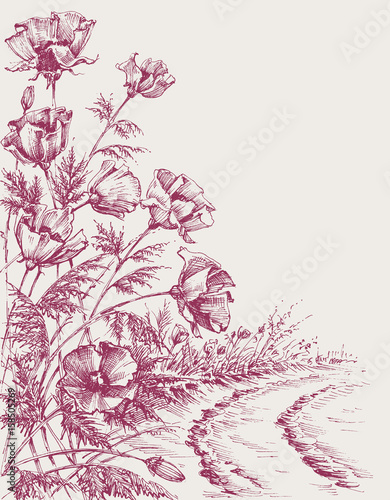 Poppy flowers on the road hand drawing. Summer background design - 158505269