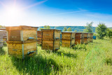 Hives in an apiary with bees flying to the landing boards. Apiculture.