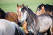 Herd of horses.