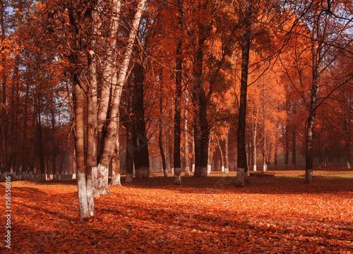 Papiers peints Rouge traffic autumnal park with sunlight