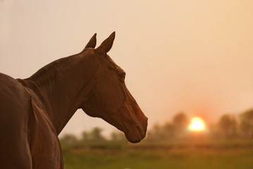Portrait of a horse with a beautiful background