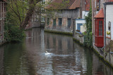 Historical brick buildings along canal with beautiful white swan in spring in the medieval neighborhood of Bruges (Brugge), Belgium