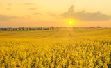 field landscape, farmlands summer