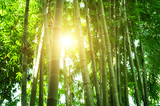 Bamboo forest in Asia