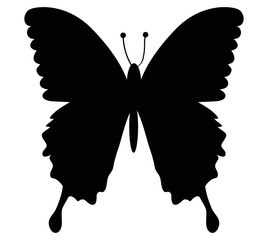 butterfly fly black icon vector