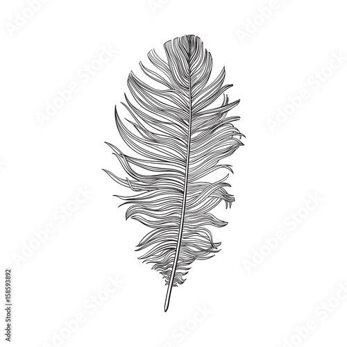 ubergeben-sie-gezogene-smoth-schwarzweiss-taubenvogelfeder-skizzenart-vektorillustration-auf-weisem-hintergrund