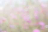 cosmos flowers abstract blur background wallpaper nature vintage colorful pastel pink color summer sunlight blossom spring
