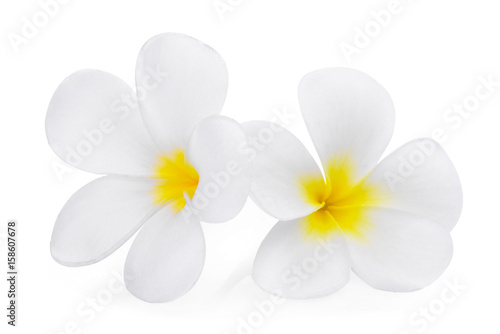 Aluminium Plumeria white frangipani (plumeria) flower isolated on white background