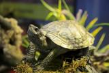 Stolze Schildkröte inmitten von Grün