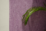 Green Fern on a Purple Wall