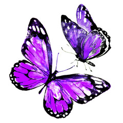 beautiful violet butterflies,watercolor,isolated on a white