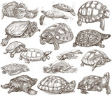 Turtles - collection of hand drawings, freehand sketches on white. - 158662029