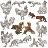 Poultry - An hand drawn full sized pack. Freehand sketching on white background. - 158662093