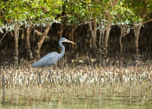 Foto op Canvas Abu Dhabi eastern mangroves abu dhabi