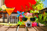 hangover dog on summer holidays vacation with headache after cocktail