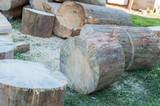 Dry pine firewood