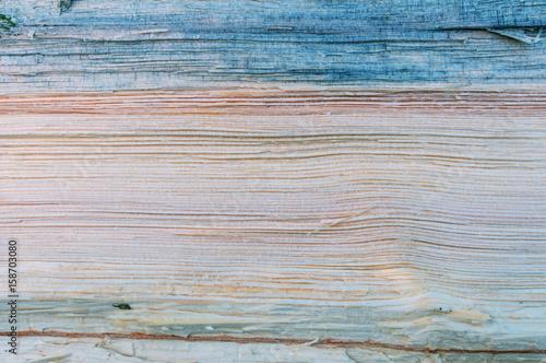cut pine tree background - 158703080