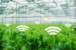 Internet of things in agriculture. Smart greenhouse with wireless control.