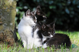 Three Kitten sitting on meadow