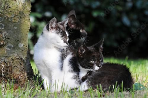 Three Kitten sitting on meadow