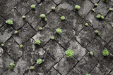 bright green succulents on black and white (grey) wall made by stone block, growing from cracks and spaces on the wall. Green wall for green life.