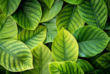 the  Fresh tropical Green leaves background - 158747661