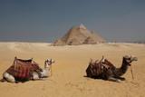 camel and pyramid Egypt