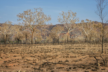 Savanna after Bushfire at the Outback – Western Australia