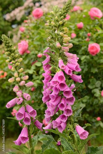 Blumen 806
