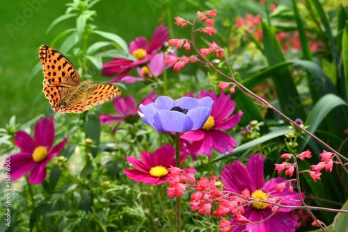 Schmetterling 355