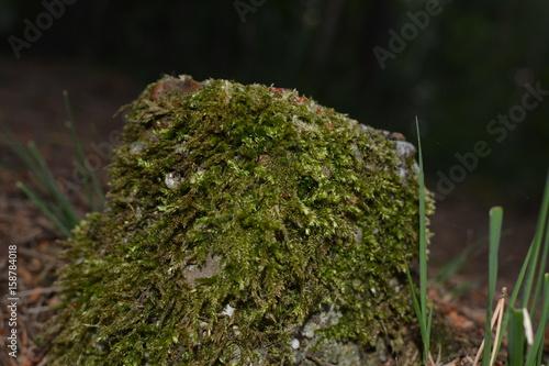 Papiers peints Nature Steen begroeid met mos