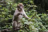 Kleiner Affe auf Baum im Jungle hält Ausschau