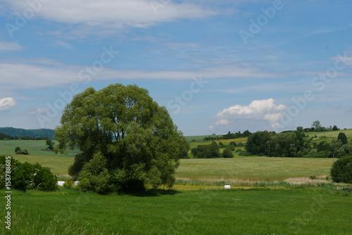 Baum auf der Sommerwiese in Tschechien