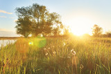 Morning on a bright golden green meadow at sunrise on a summer sunny day